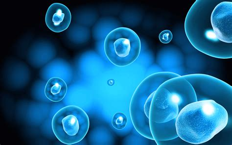 stem cells medicine across borders building a us israeli stem cell