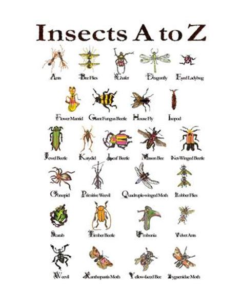 bug blonsky and his list of don ts books insects a to z photographic print by autrey autrey