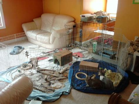 rabbit indoor play  gallery inspiration