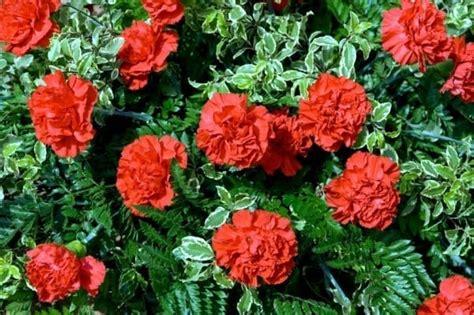 fragrant herbs flowers   aromatic garden