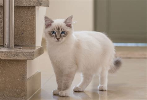 how to introduce kittens into a new home cats kittens