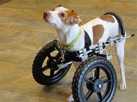 wheelchair for front legs carts wheelchair cart wheel cart mobility cart mypetsbrace