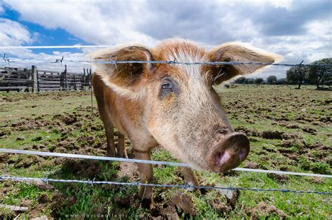 Imagenes Animales De La Sierra | animales de la sierra imagui