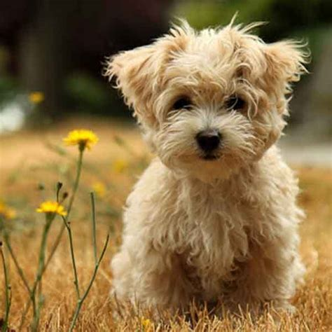popular dogs top 10 most popular breeds