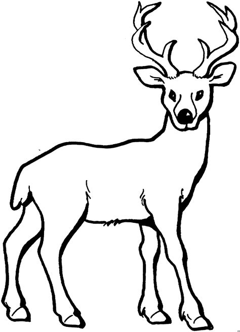 running deer coloring page junger hirsch mit geweih ausmalbild malvorlage tiere