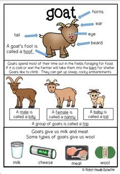 Spellings Baby Farm by Farm Animals Cow Themed And Mathematics