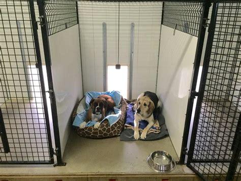 boarding dogs boarding daycare countryside kennel