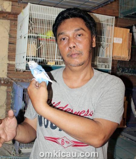 Mainan Anak Burung Parkit Tarik tips menangkar burung parkit ala rudy pelung om kicau