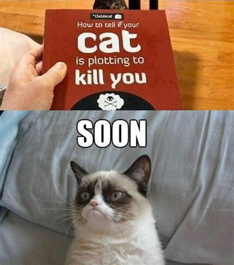 Soon Cat Meme - 24 threatening soons smosh