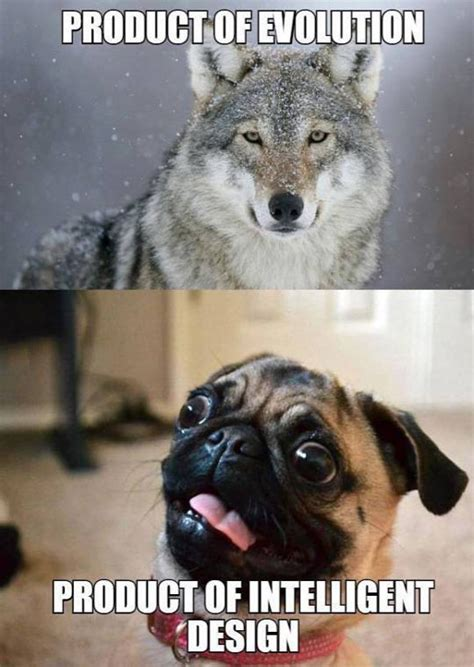 difference between and pugs the difference between evolution and intelligent design the meta picture
