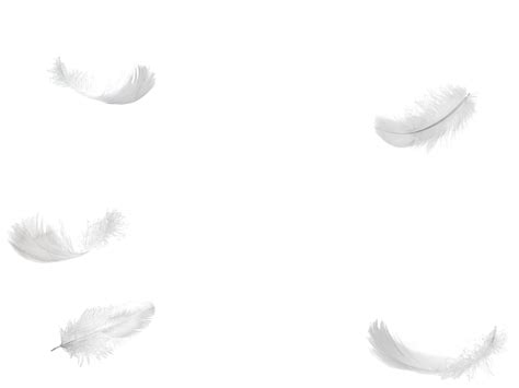 no background five feathers falling no background png