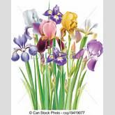 Vectors Illustration of Bouquet of Iris flower csp19419077 - Search ...