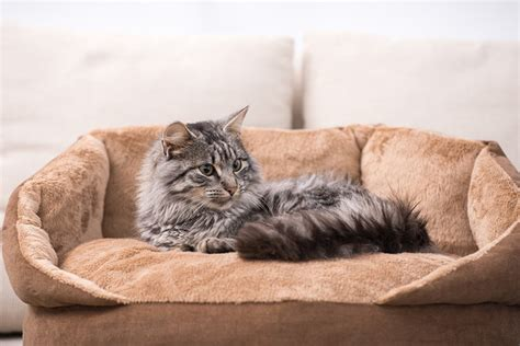 best cat bed best cat beds our top 5 choices