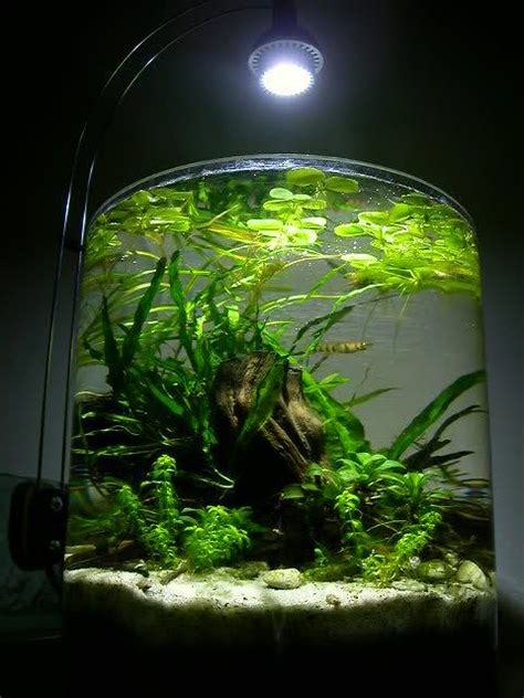 k design aquarium 2 gallon pico aquarium gorgeous aquascape plants
