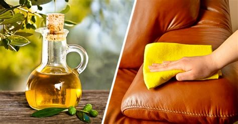 Info Minyak Zaitun minyak zaitun info terang
