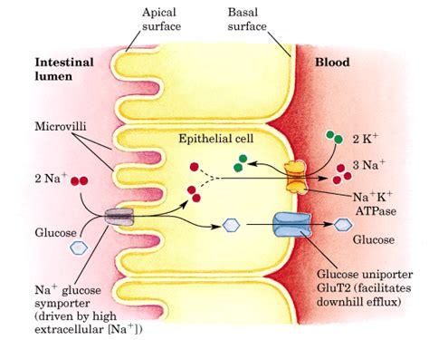 techno science cell membrane