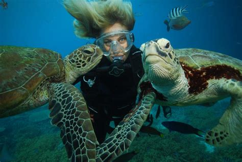 hamilton dive hamilton island diving