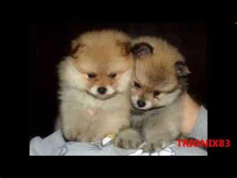 imagenes animales bonitas animales bebes tiernos imagenes recopilacion algunos
