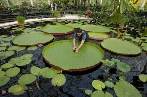 ausgefallene pflanzen garten teich bepflanzen mehr als 70 ideen archzine net