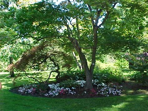 best trees to plant in your yard for shade free shade