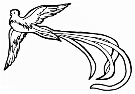 Quetzal Coloring Page images of the resplendent quetzal coloring pages