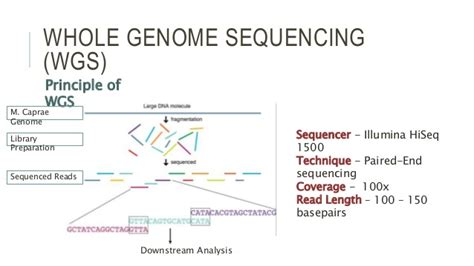 illumina whole genome sequencing master thesis presentation