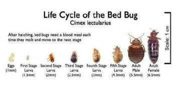 do bed bugs fly or jump bed bugs saratoga county new york