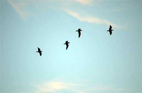 flock of birds at sunset 4 free photos highres