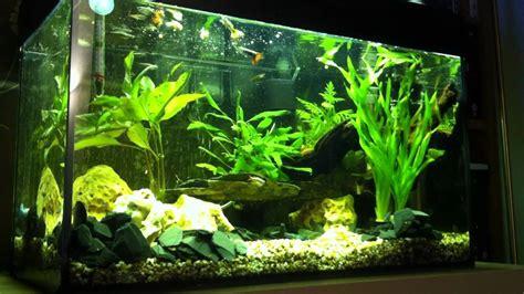 Aquarium L With Fish by Fish For 60l Aquarium 60l Tropical Fish Tank