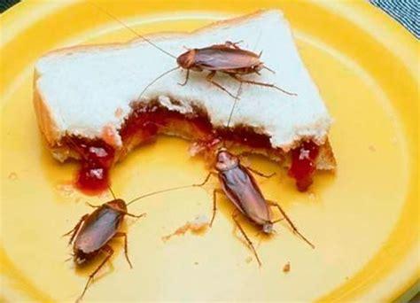 como eliminar cucarachas de la cocina bonito cucarachas cocina fotos exterminio e cucarachas de