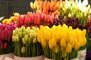 Wholesale Flowers The Importance Of Filling A Niche Australian Cut Flower