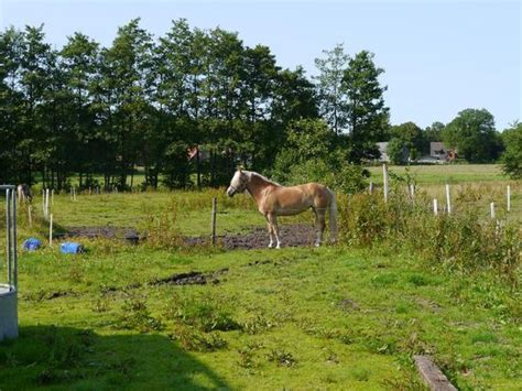 suche stall suche stall weide f 252 r vier pferde ponys in ro 223 dorf