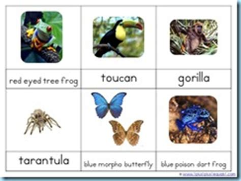 printable rainforest animal cards rainforest printables and more 1 1 1 1