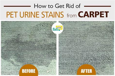remove pet urine stains  carpet  baking soda