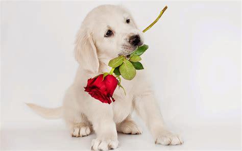 imagenes animales perros im 225 genes de tiernos perritos fotos e im 225 genes en fotoblog x