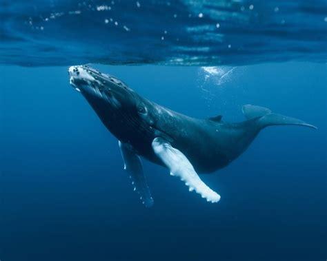 imagenes animales que viven en el mar 191 qu 233 ventajas tienen los animales que viven en el mar