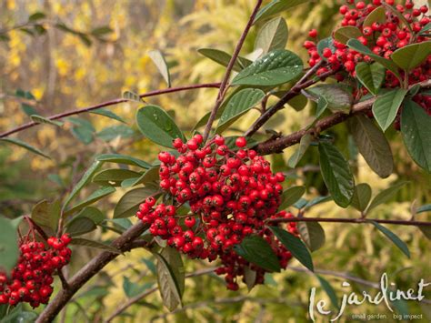 winter foliage plants the winter garden a berry bounty