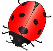 Cartoon Ladybugs Ladybug Pictures How To Draw