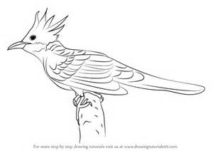 how to draw doodle birds learn how to draw a cuckoo birds step by step drawing