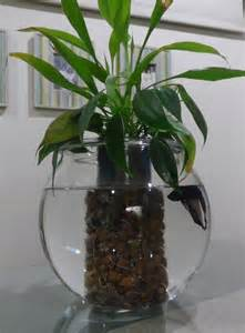 betta fish aquarium with water plants just add some water