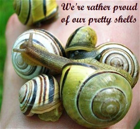 slug  snail control natural organic ways  deter