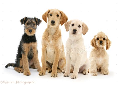 four dogs four dogs sitting in a row photo wp39207