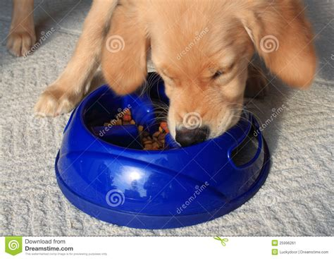 hungry puppies hungry puppy stock image image 25996261