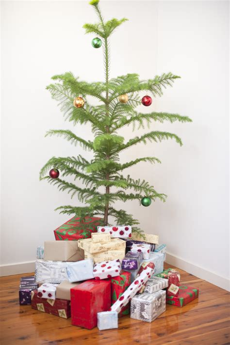 photo  modern simple natural christmas tree