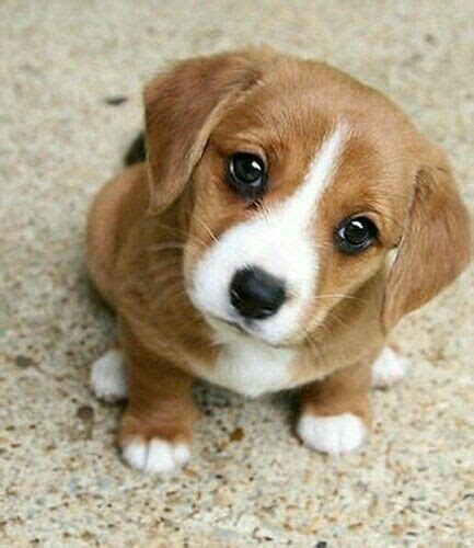 dogs babies 120 best dogs images on animal babies animaux and cubs