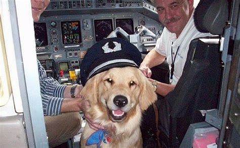 thanks to courageous pilots 75 000 shelter dogs