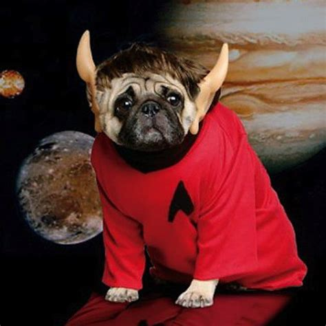 how does pugs live 10 more awesome costumes for pugs