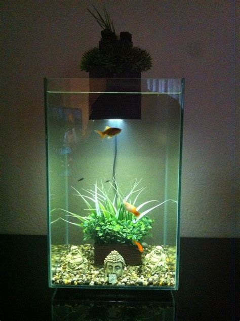 fluval chi aquascape fluval chi pic jpg aquascapes pinterest