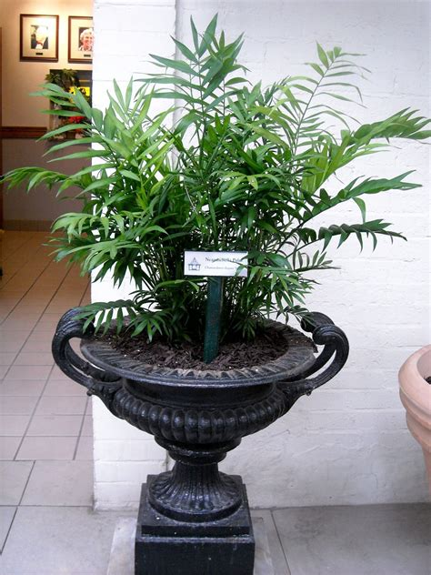 palm piper house walter knoll florist client exotic palm