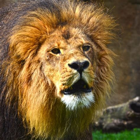 imagenes epicas de animales animales de la quot a quot a la quot z quot bioparc valencia
